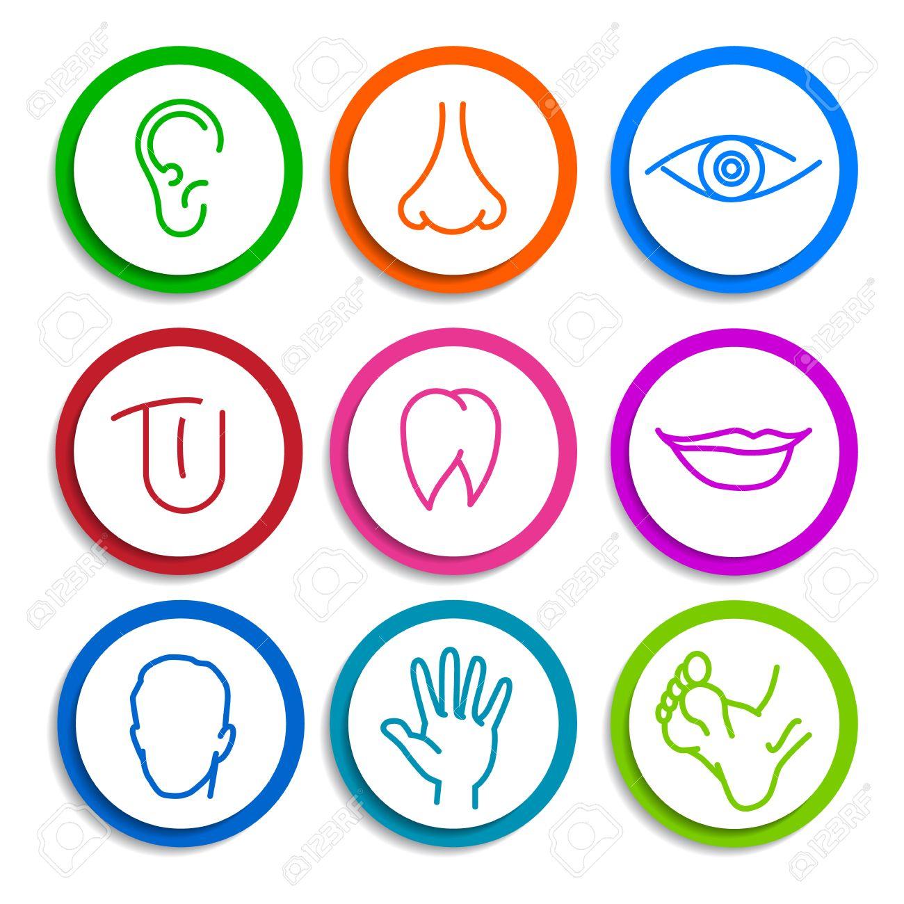 Reihe Von Farbigen Icons Mit Flachen Teilen Des Menschlichen Körpers ...