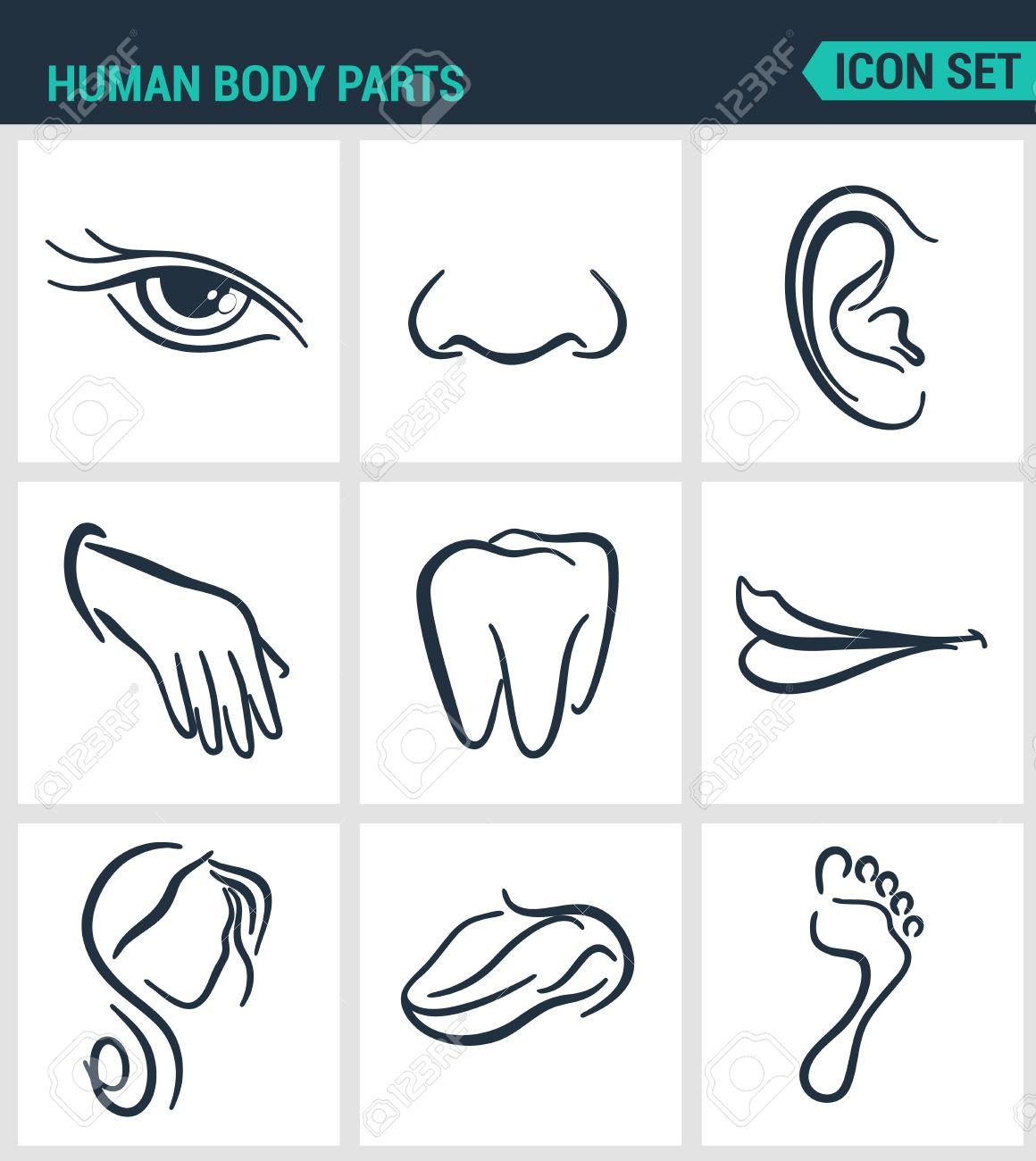 Reihe Von Modernen Vektor Icons Menschliche Körperteile Augen Nase