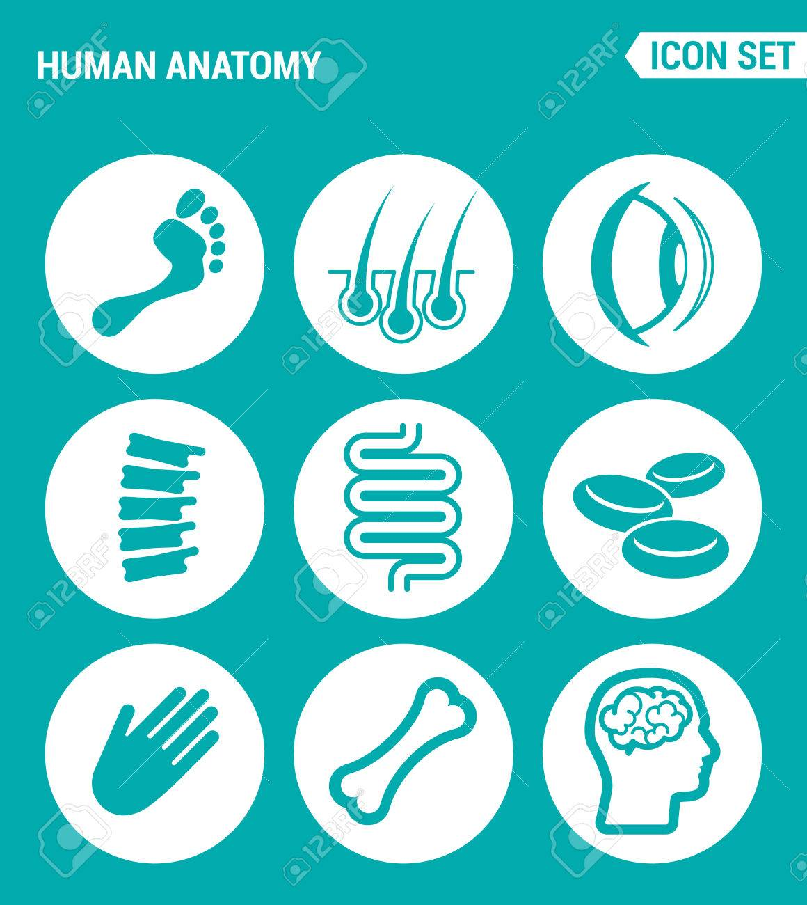 Vektor-Set Web-Icons. Anatomie Des Menschen, Bein, Haare, Augen, Fuß ...
