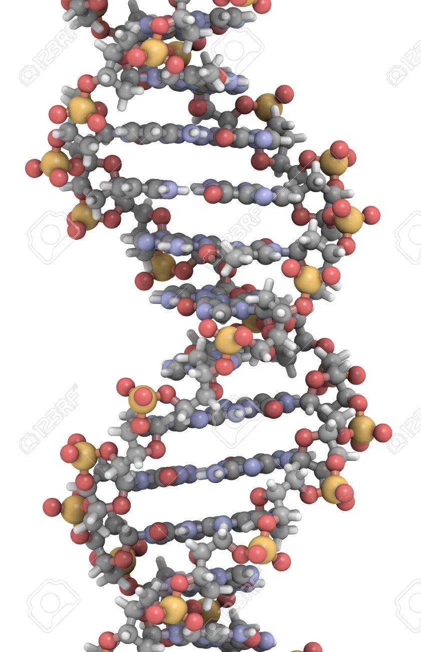 DNA 3D structure. DNA is the main carrier of genetic information in all organisms. The DNA shown here is part of a human gene and is shown as a linear double helix. Stock Photo - 12857406