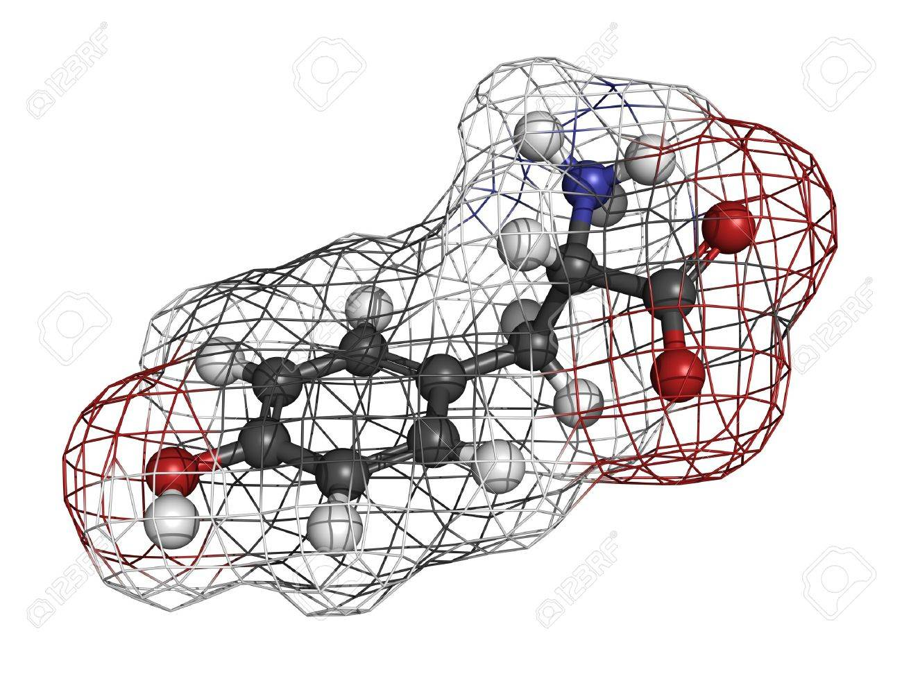 Tyrosine (Tyr, Y) amino acid, molecular model. Amino acids are the building blocks of all proteins. Atoms are represented as spheres with conventional color coding: hydrogen (white), carbon (grey), oxygen (red), nitrogen (blue) Stock Photo - 18016604