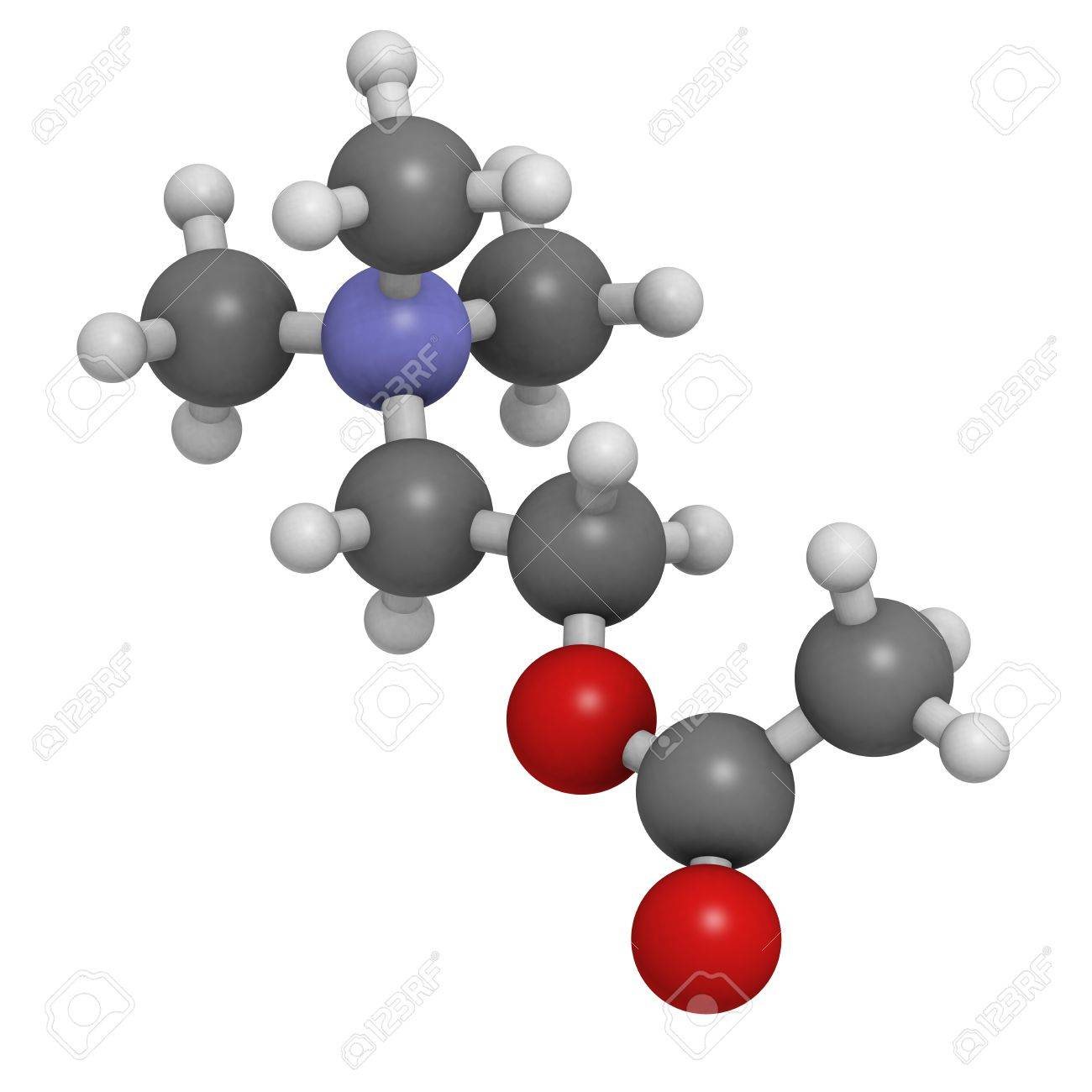 Acetylcholine (ACh) neurotransmitter, molecular model. Atoms are represented as spheres with conventional color coding: hydrogen (white), carbon (grey), oxygen (red), nitrogen (blue) Stock Photo - 18805878