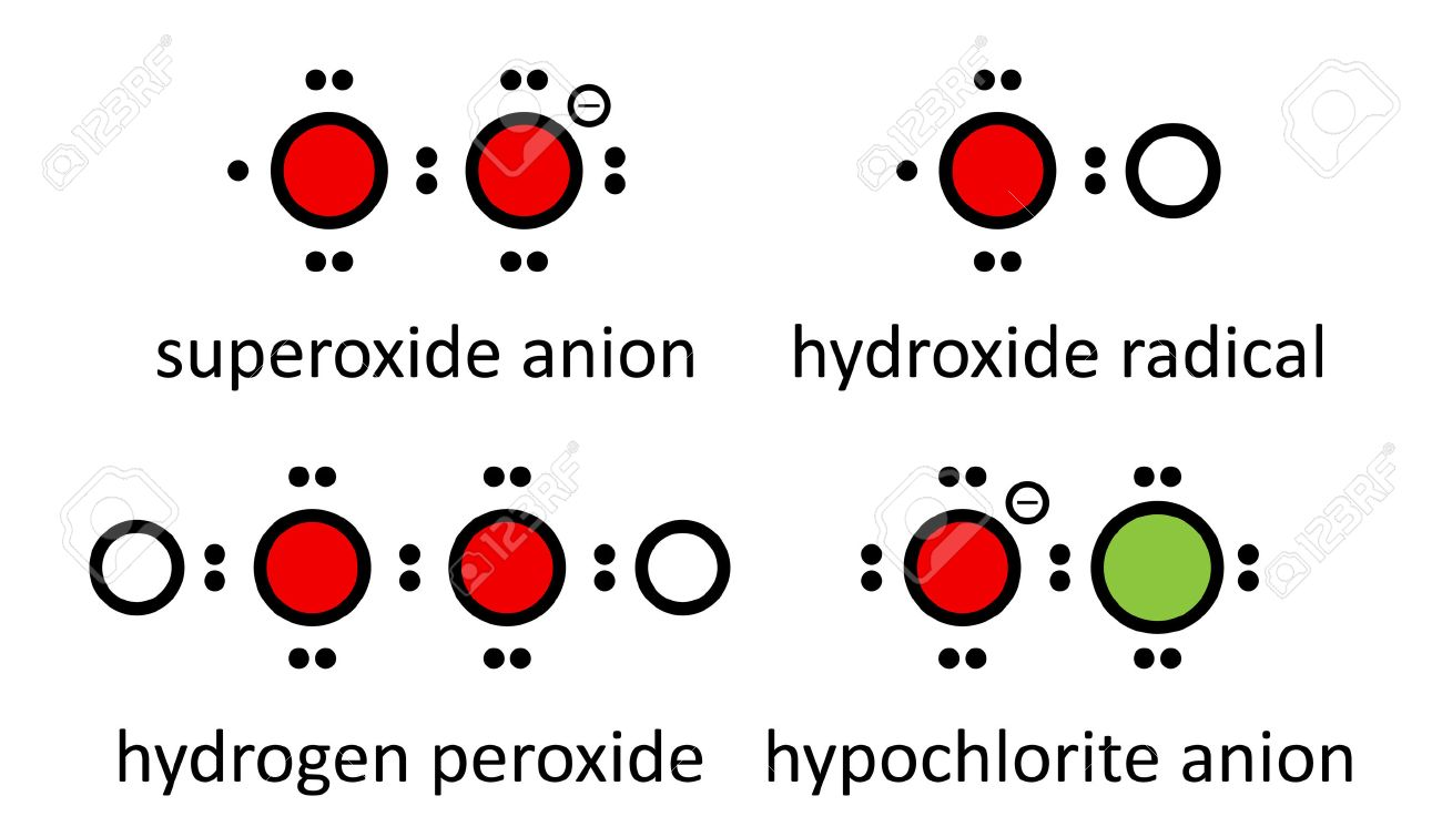 Reactive oxygen species (ROS): superoxide anion, hydroxide radical, hydrogen peroxide and hypochlorite anion. Lewis electron dot diagrams; atoms shown as color coded circles: hydrogen (white), oxygen (red), chlorine (green). - 24396738