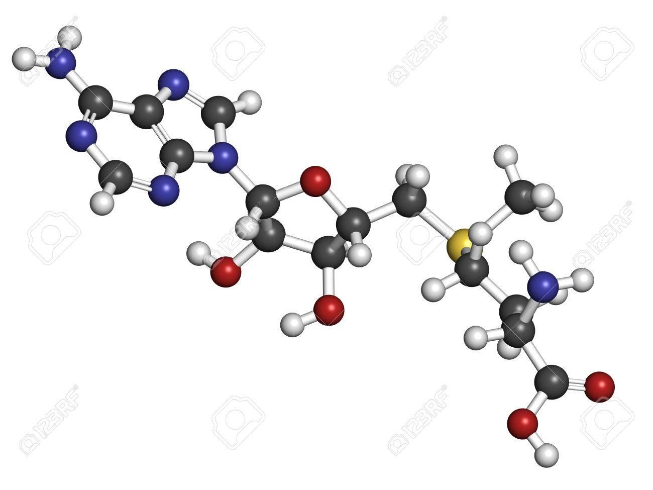 S-adenosyl methionine  SAM