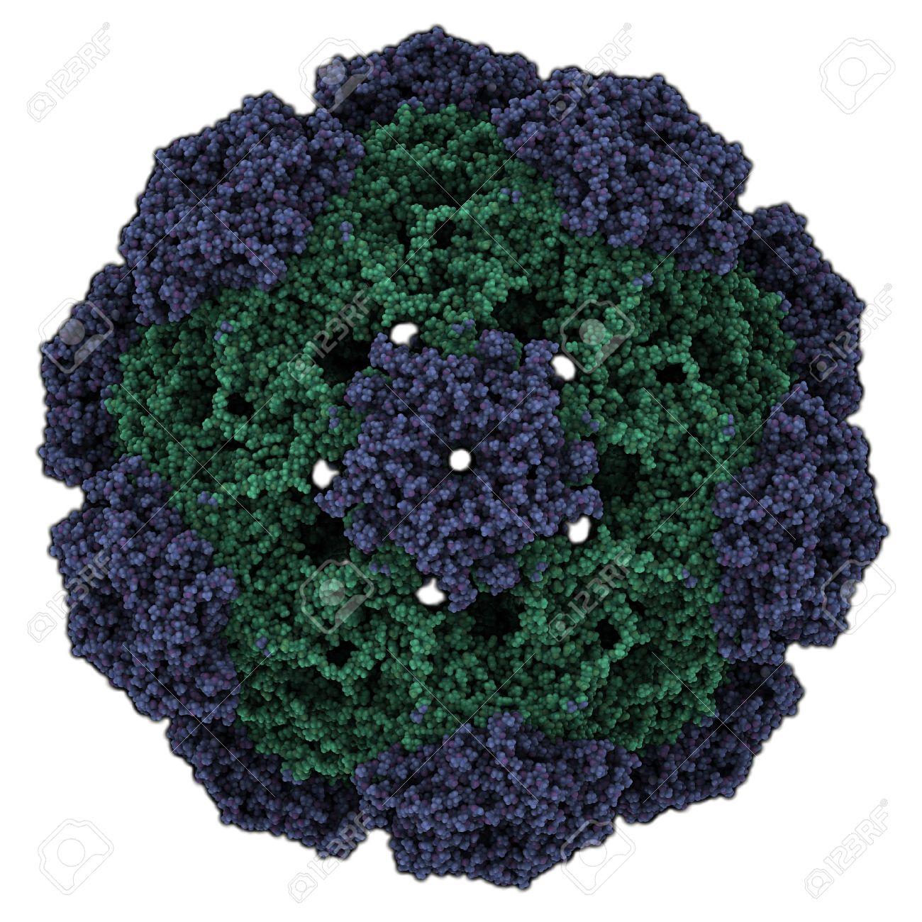 virus papiloma nivel 16)