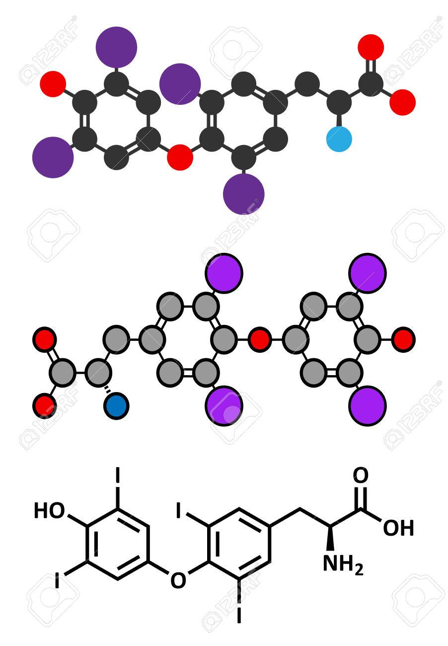 Thyroxine T4 Levothyroxine Thyroid Hormone Molecule Prohormone