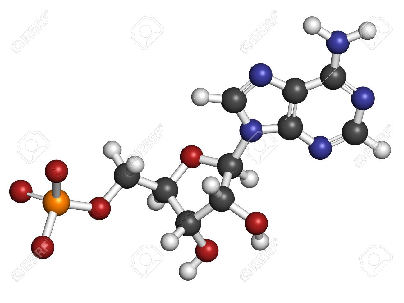 アデノシン一リン酸 (AMP、アデ...