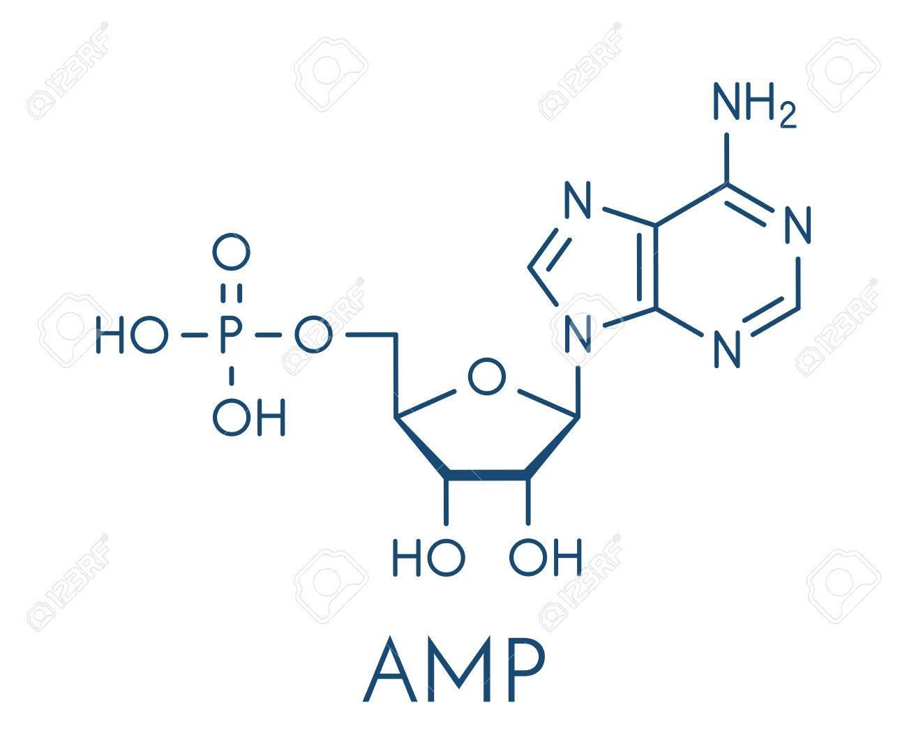 アデノシン一リン酸 (AMP、アデニル酸) 分子。RNA のヌクレオチドの単 ...