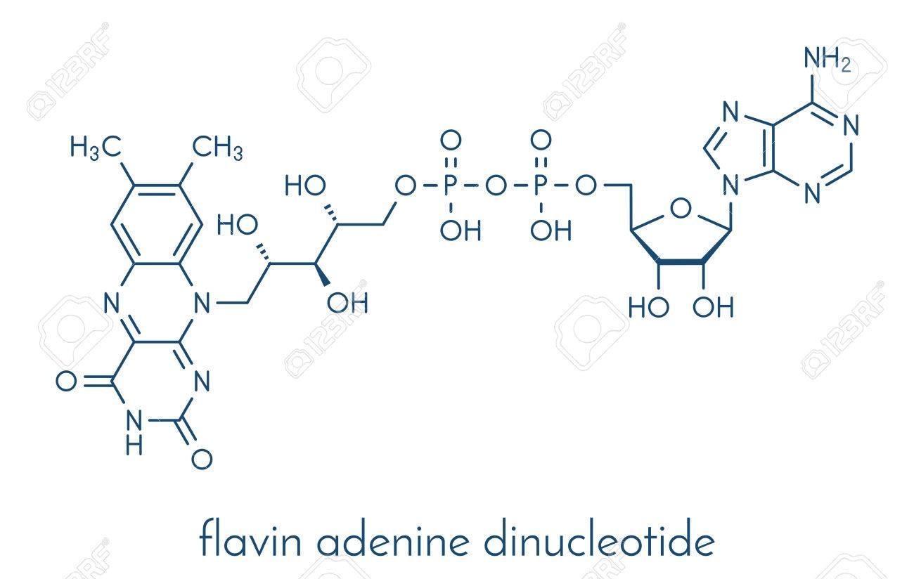 アミド アデニン ヌクレオチド ニコチン ジ