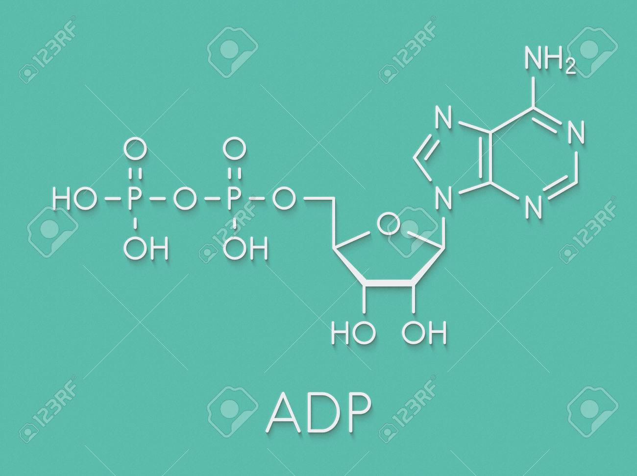Adenosine Diphosphate Adp Molecule Plays Essential Role In