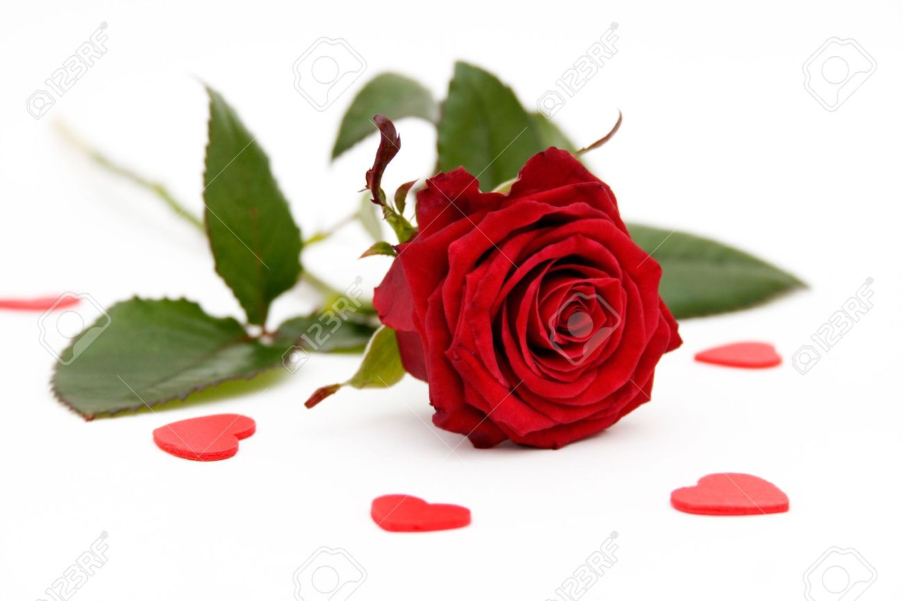 Red rose and little hearts on white background Standard-Bild - 928625
