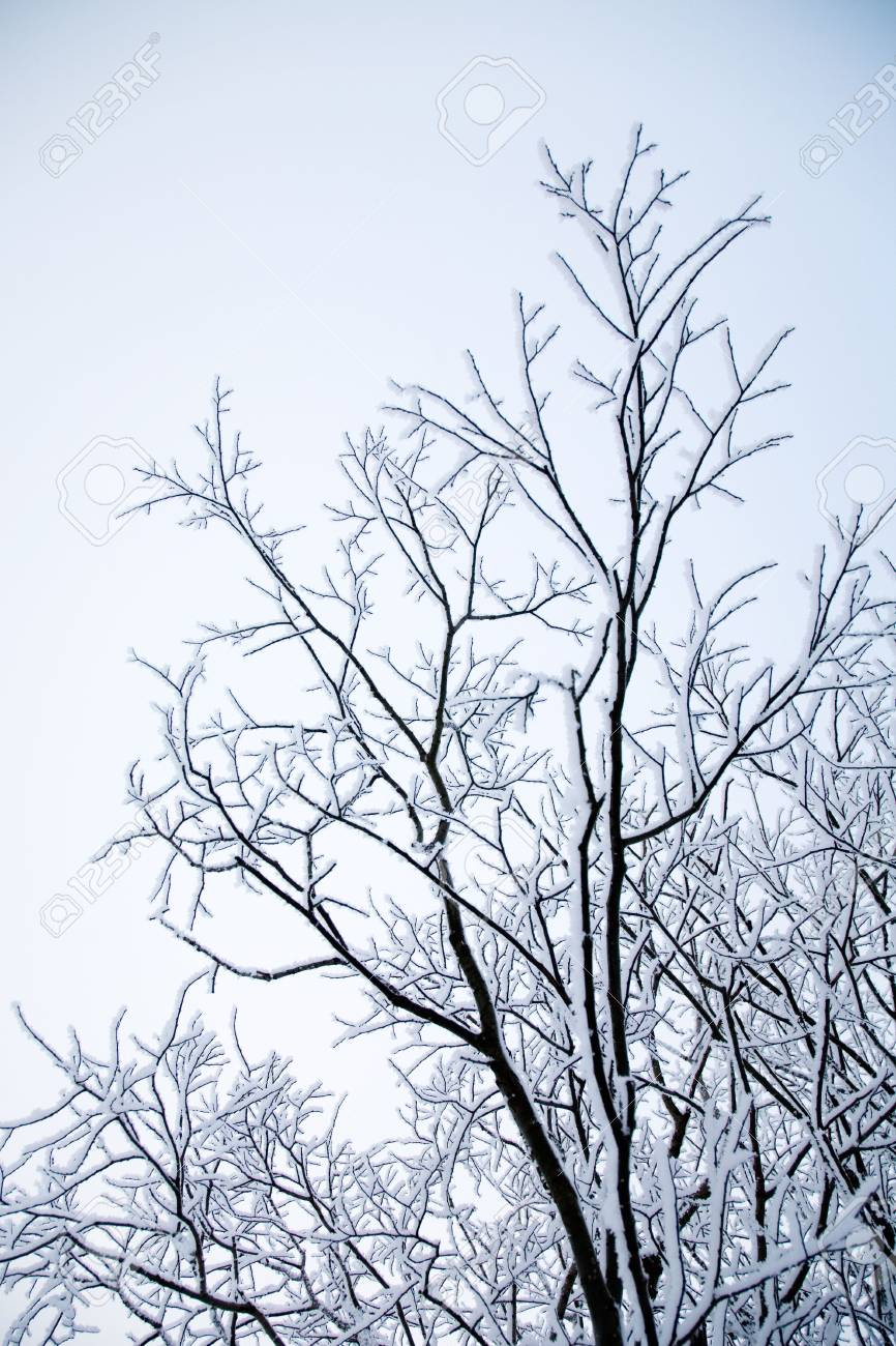Winter landscape with frosty trees and bushes Stock Photo - 6187790