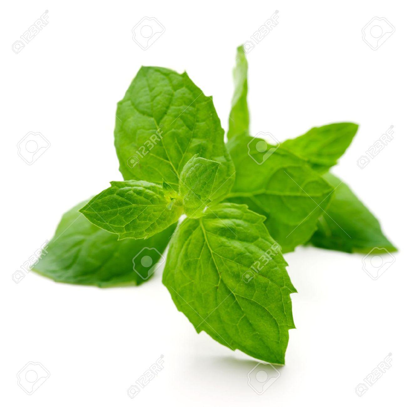 Fresh mint leaves on white isolated background Stock Photo - 15034627