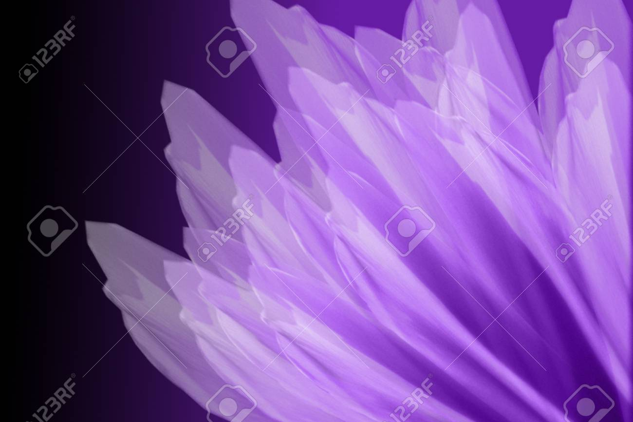 Purple Flower Petals Stock Photo Picture And Royalty Free Image
