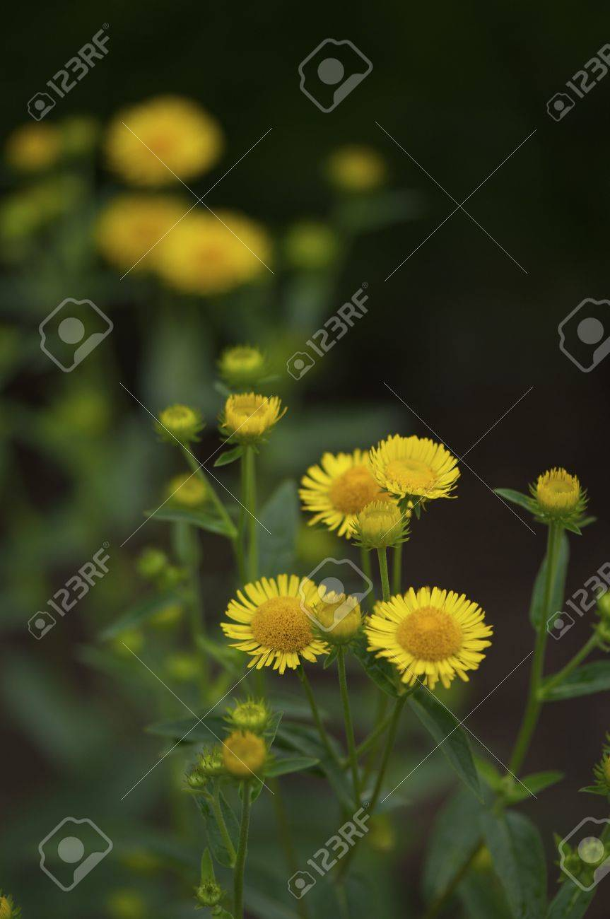Flowers bed with various daisy, digitalis, and other autumn flowers, beautiful and colorful Stock Photo - 16189511