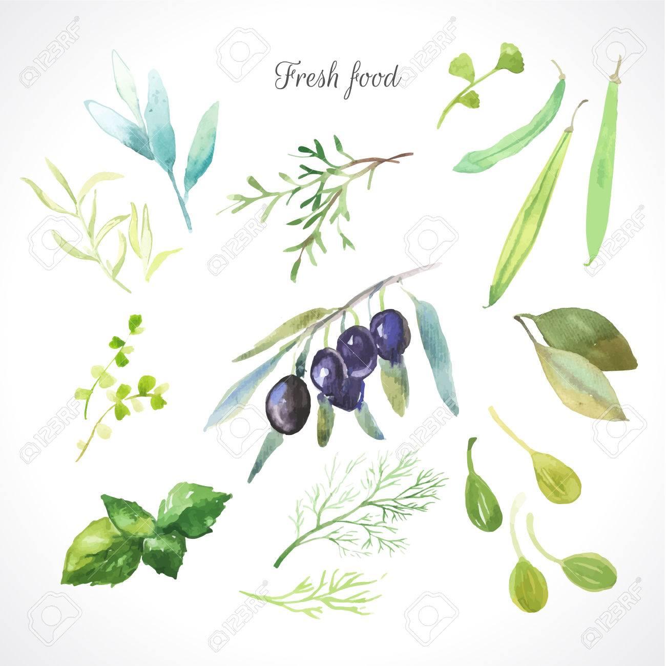 Aquarelle Illustration Du0027une Technique De Peinture. Aliments Biologiques  Frais. Ensemble De Différentes