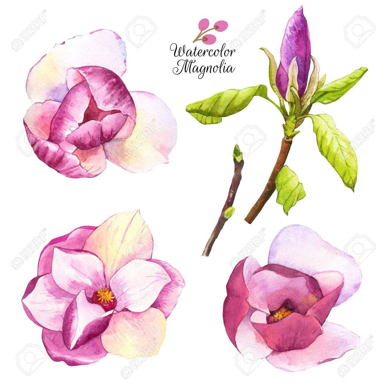 set of spring pink flowers collection of watercolor realistic