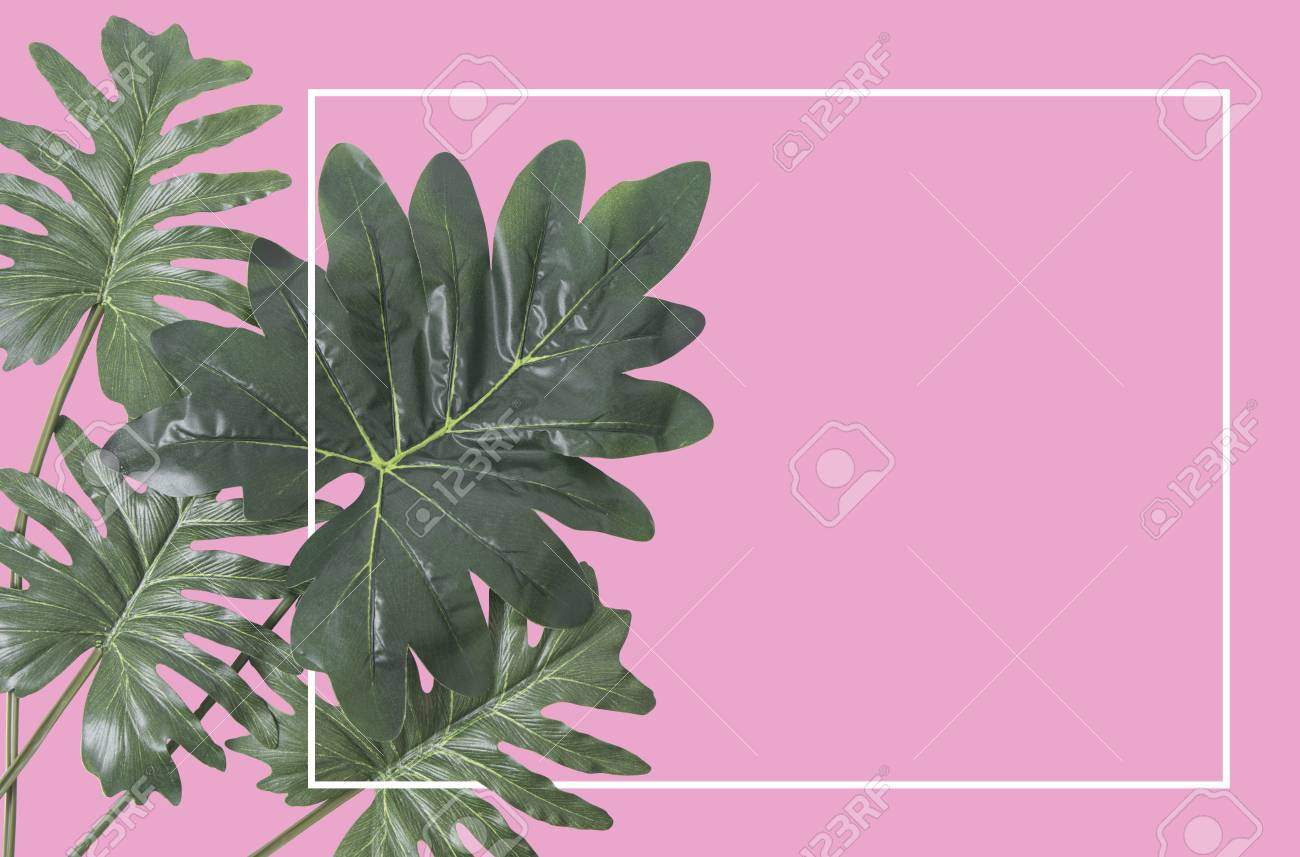 Flat Lay Creative Nature Tropical Leaves Frame On Pink Background Stock Photo Picture And Royalty Free Image Image 84856488 Download the perfect tropical leaves pictures. flat lay creative nature tropical leaves frame on pink background