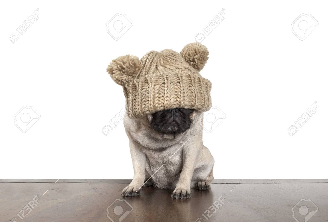 a3423769dad Fed up cute pug dog puppy with knitted hat That covers eyes Stock Photo -  62851250