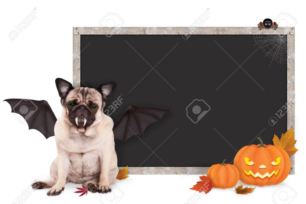 Mops Hund Als Fledermaus Für Halloween Verkleidet, Mit Leeren Tafel ...