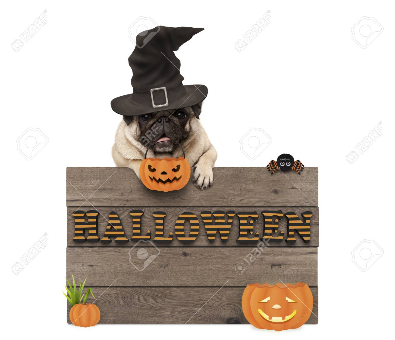 Cute Halloween Pug Puppy Dog With Witch Hat And Pumpkins And Stock Photo Picture And Royalty Free Image Image 88461682