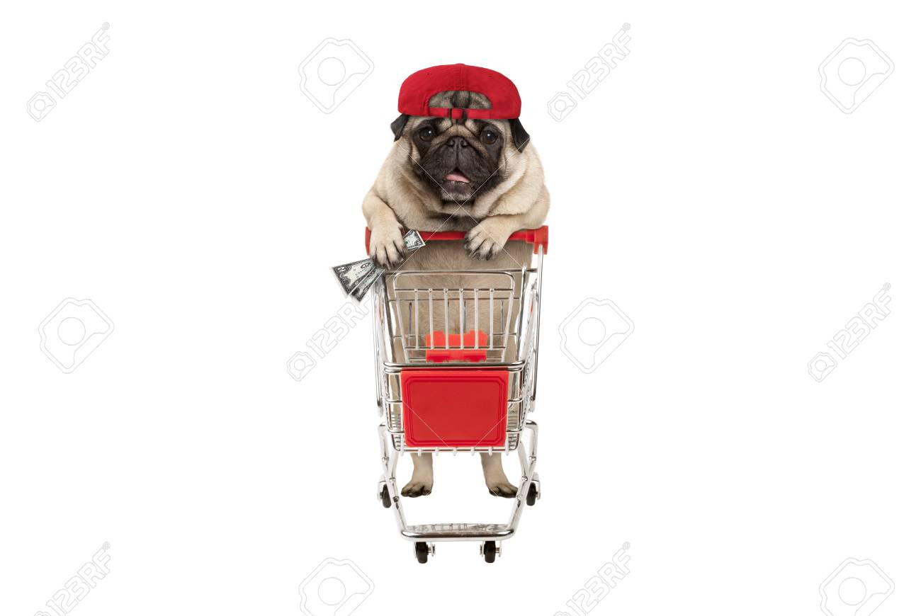 funny happy pug puppy dog with money in is hand, leaning on shopping cart. isolated on white background - 112438553