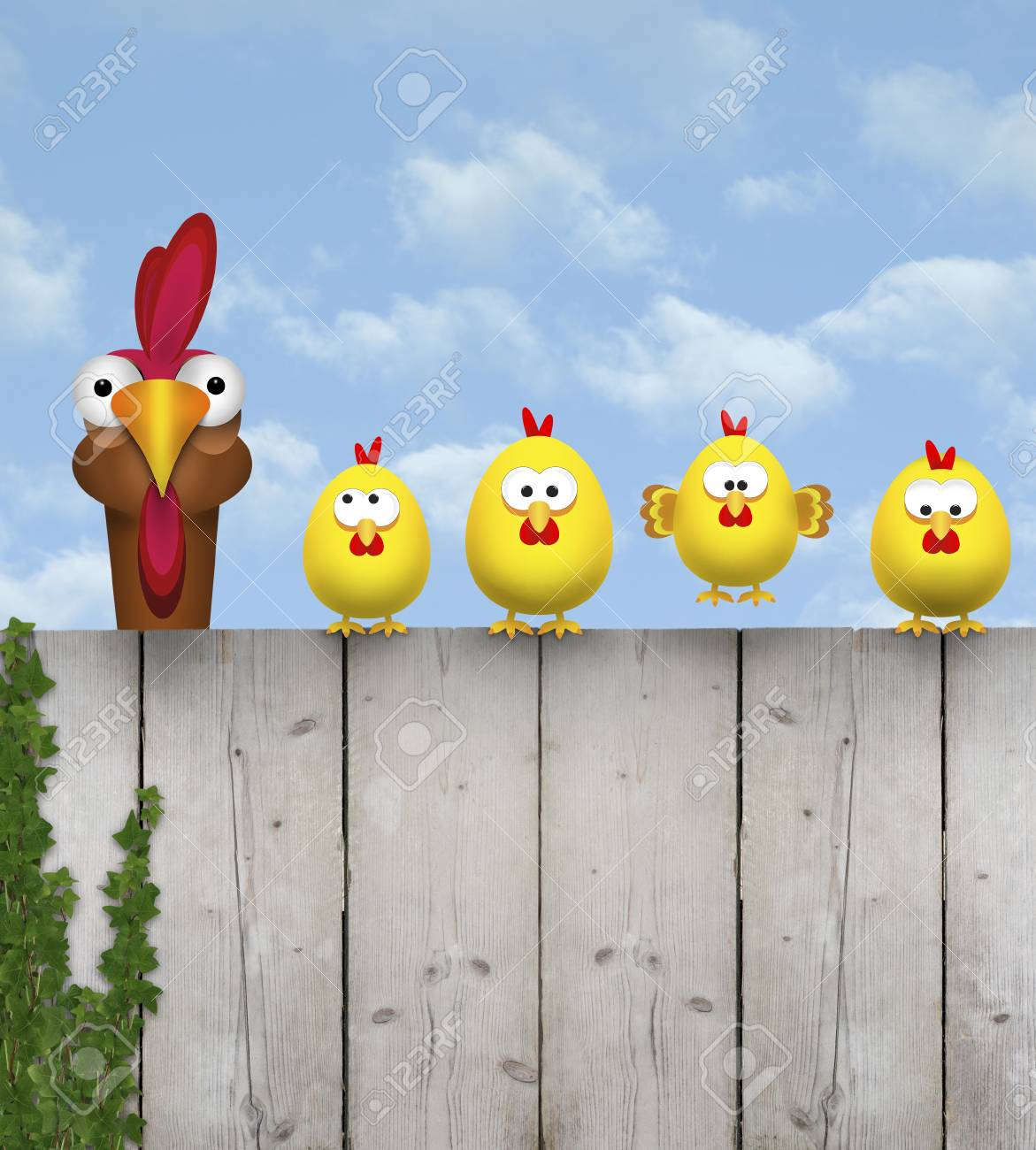 cute free range cihcken mother with her chick kids, sitting on old wooden fence, isolated on white background - 121069603