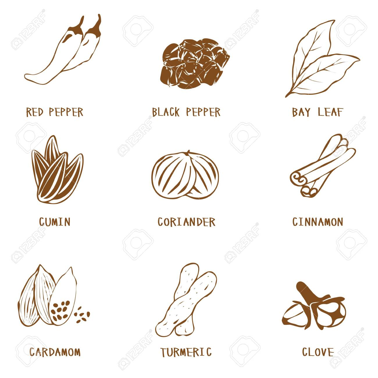 Spices and spices set : vector - 147298873