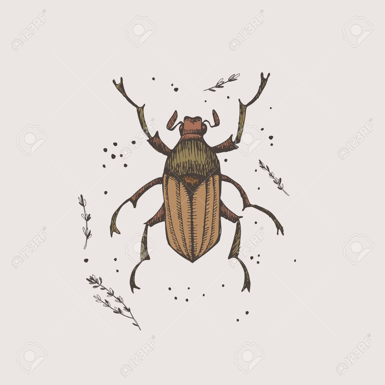 Hand-drawn chafer beetle on a light isolated background. Insect vector illustration in vintage style. Design element for zoological composition, poster, cover, brochure. - 149452463