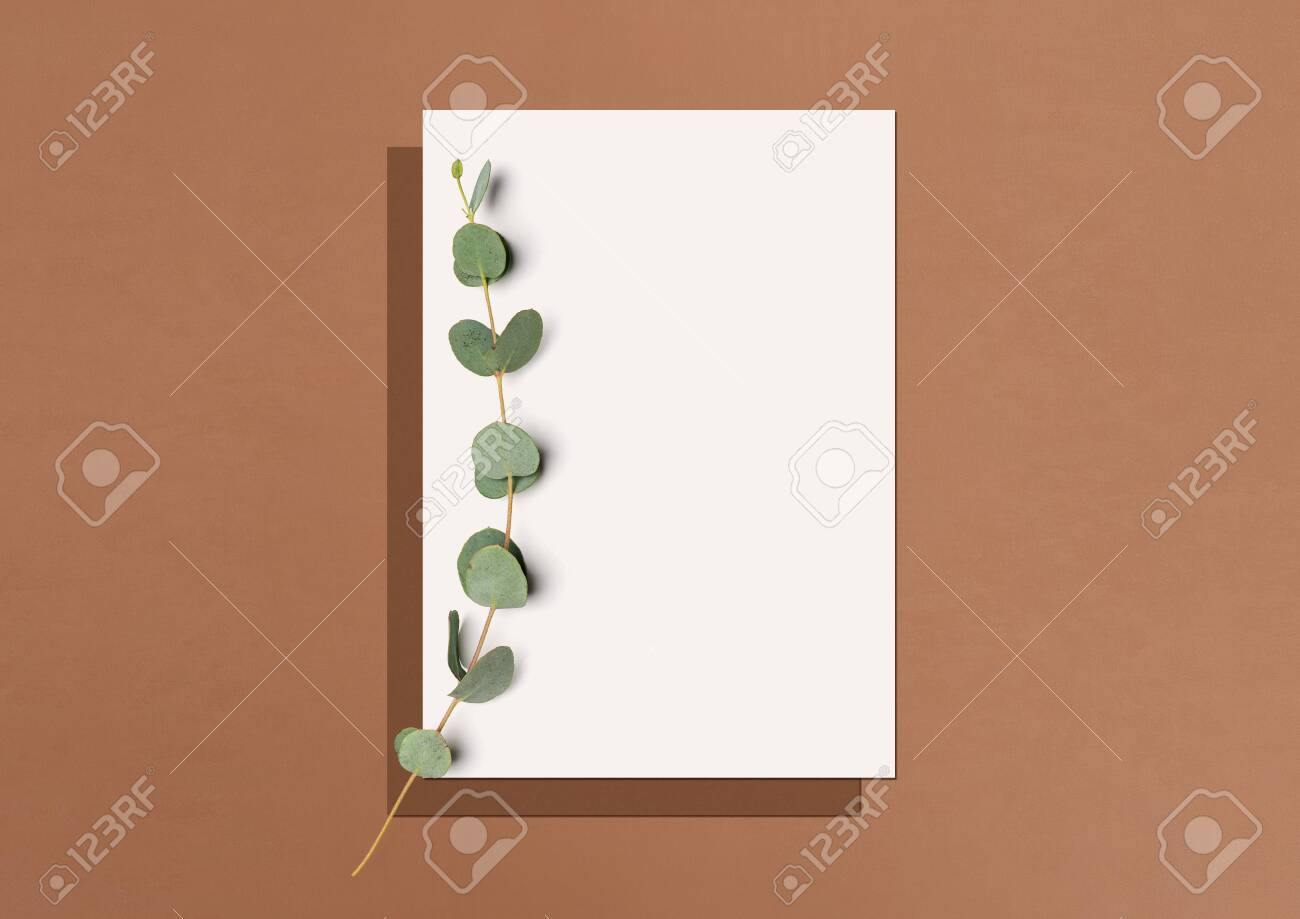 Mock up. Template for branding identity. Blank white paper and eucalyptus branch on a terracotta background with soft shadow. Flat lay. Top view. 3D illustration. - 151981483