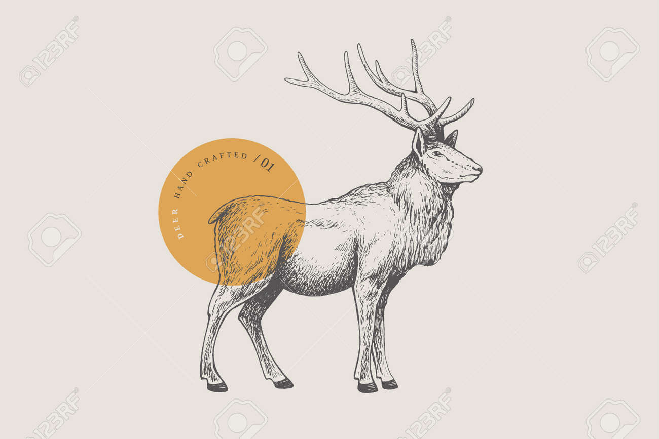 Hand drawing of a forest deer on a light background. Deer-Izyubr in vintage engraving style. - 150823932