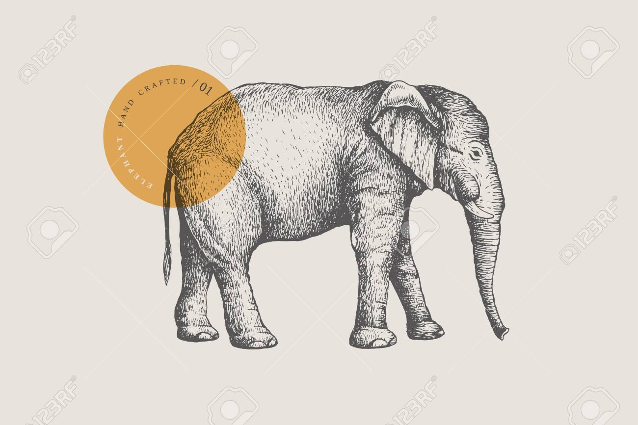 Image of a large African elephant, drawn by graphic lines on a light background. - 151407072