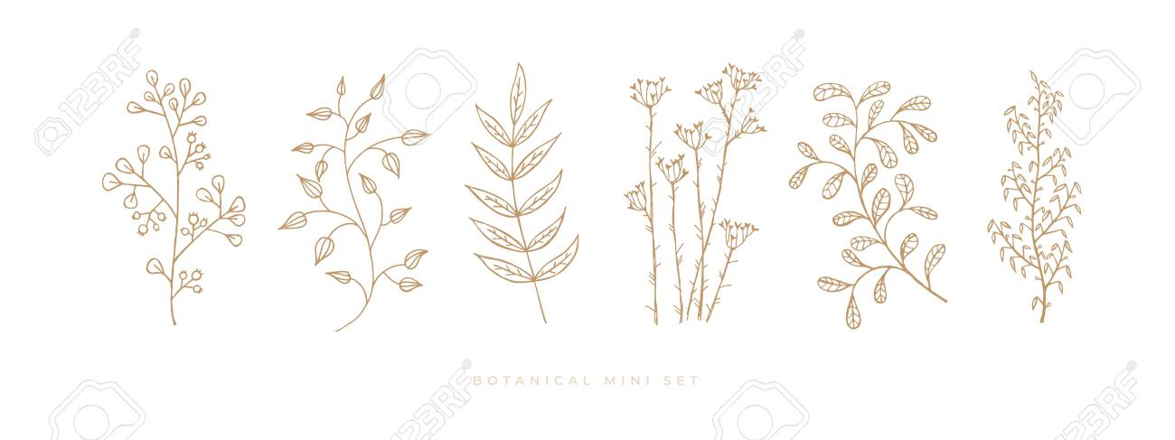 Set hand drawn curly grass and flowers on white isolated background. Trendy wildflowers and herbs. Botanical illustration. Decorative floral picture. - 151373682