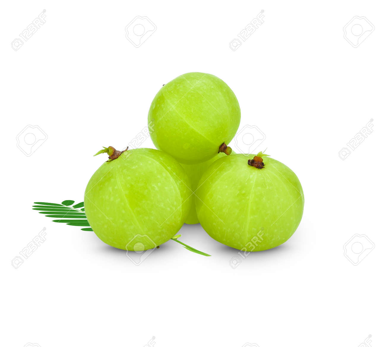 Amla green fruits ,Phyllanthus emblica isolated on white background. This has clipping path. - 144071523