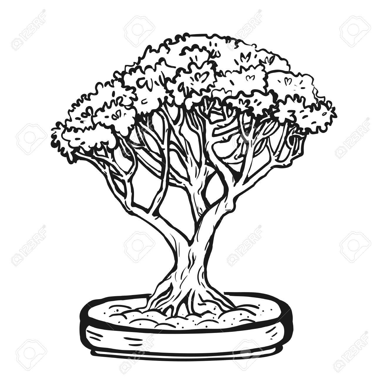 Handdrawn decorative asian bonsai tree in the pot with multitrunk. - 64303012