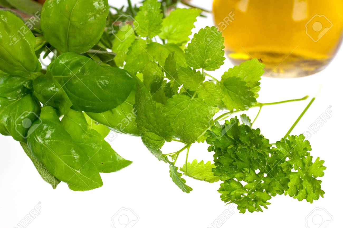 Sage,Basil,Parsley and Mint,isolated on white Stock Photo - 5539056