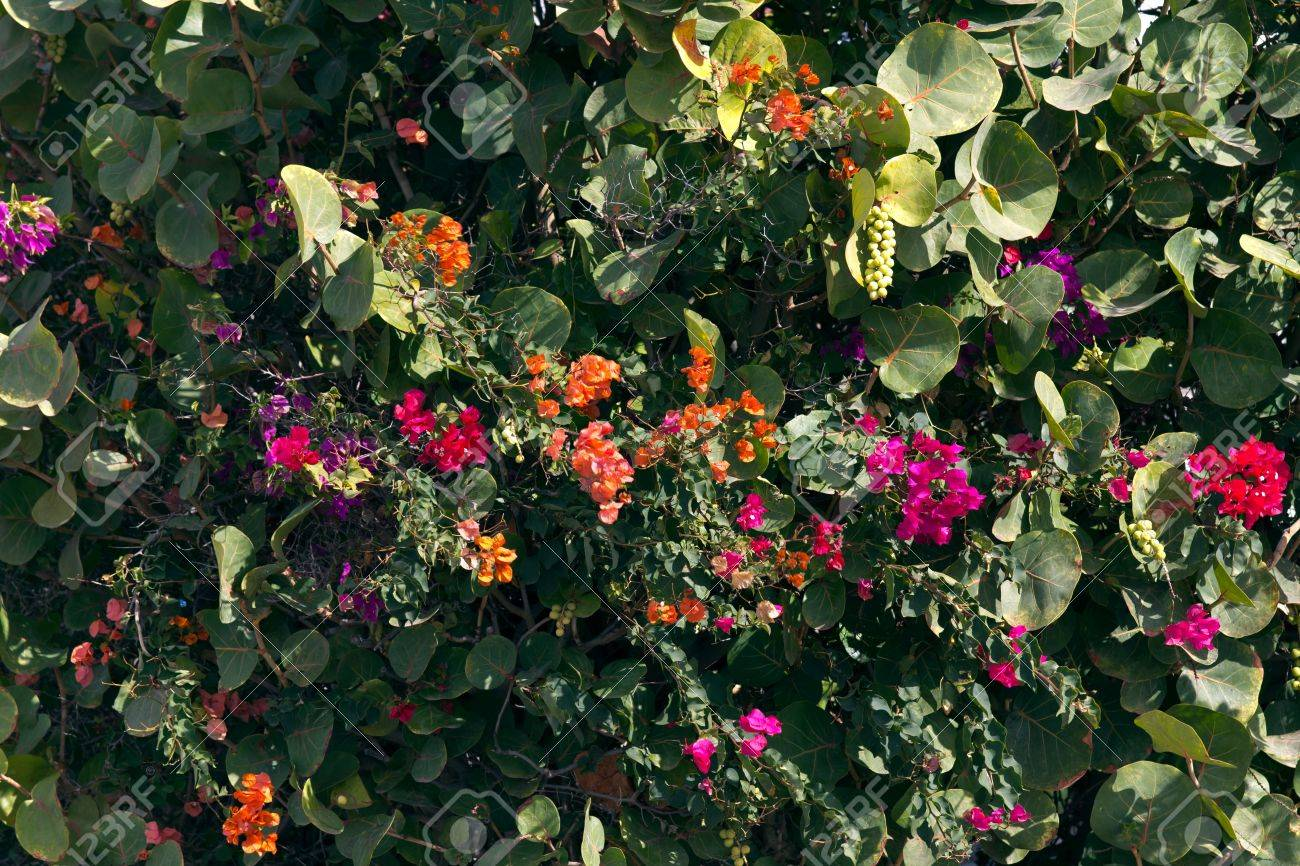 Flower Wall Flower Wallbackground Stock Photo Picture And Royalty Free Image