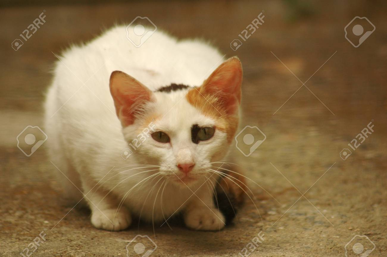 portrait of a watchful white cat Stock Photo - 11056532