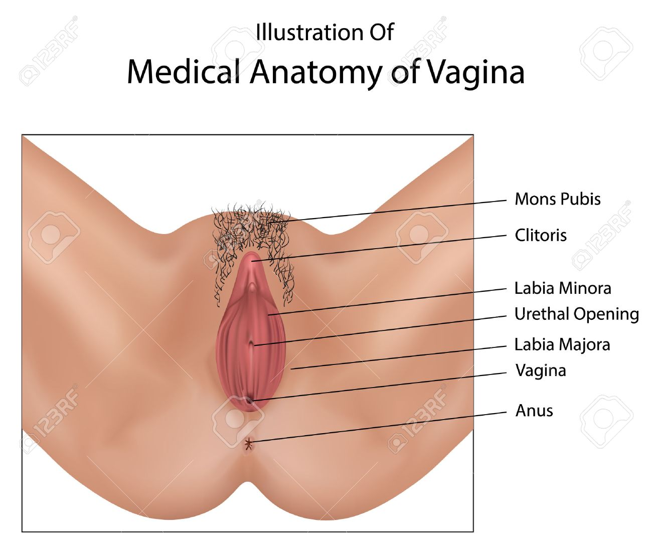 Human 3d vagina fucking pictures naked galleries