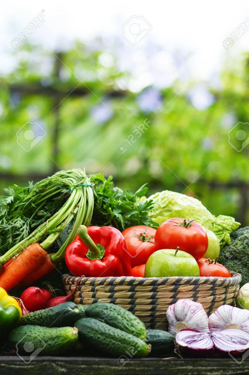 Fresh organic vegetables in wicker basket in the garden - 29355260