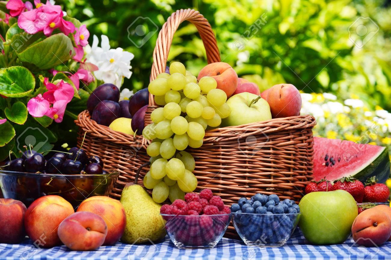 Basket of fresh organic fruits in the garden - 36917612