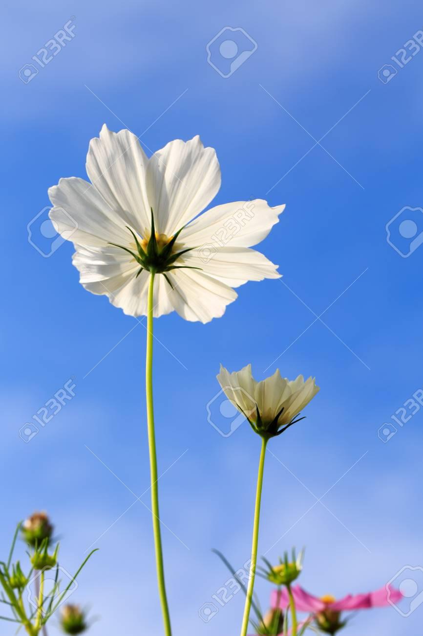 Unique Flowers White Plains Component Best Evening Gown