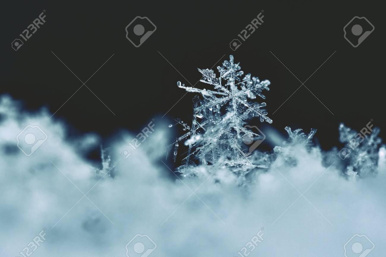 本物の雪の結晶のマクロ写真。美しい冬背景季節自然