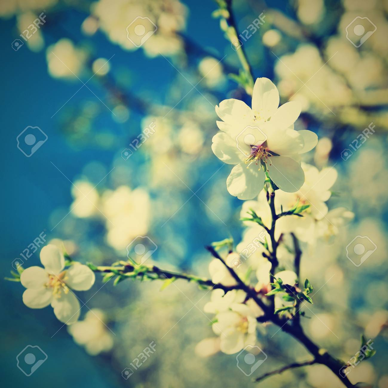 Spring Blossom Background Beautiful Nature Scene With Blooming