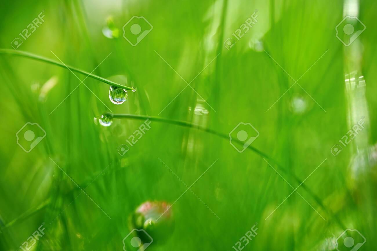 Green Nature Beautiful Close Up Photo Of Nature Green Grass