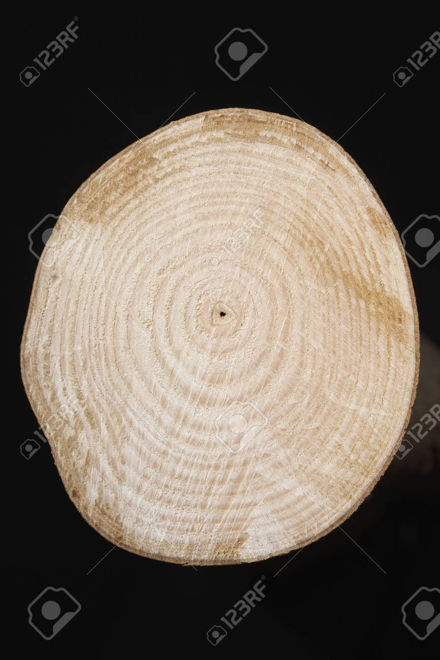 Cross Section of Tree Trunk Stock Photo - 12514098