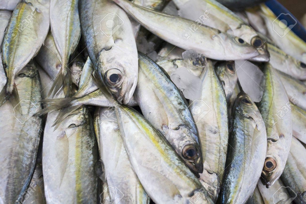 Dubai UAE Fresh fish for sale at Shindagha Market in Bur Dubai Stock Photo - 12735561