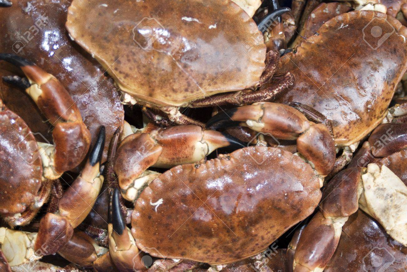 Close-up of fresh Dungeness crabs Stock Photo - 12737858