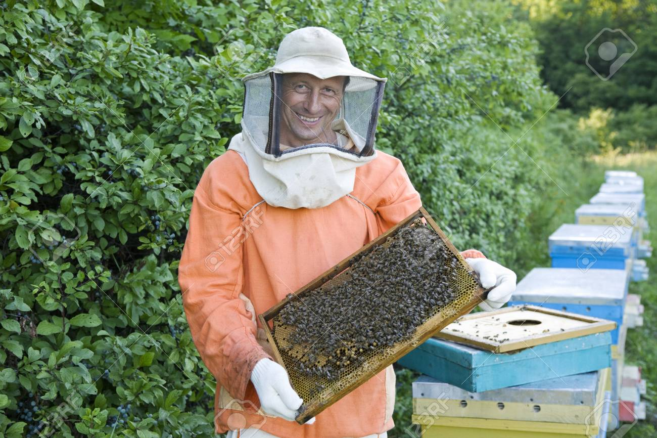 Beekeeper Holding Honeycomb with Honey Bees Stock Photo - 20716540