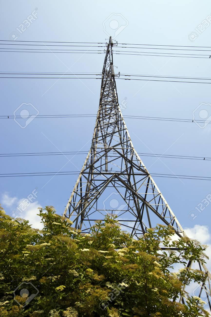 Electricity Pylon above trees Stock Photo - 23233730